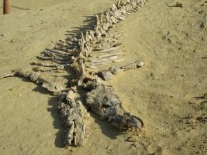 Whale Bones!